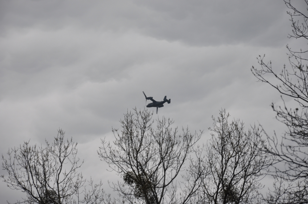 Osprey nad Wiązowną