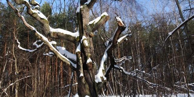Emów, zima 2009/2010