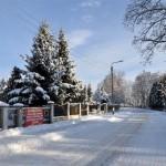 Wiązowna w zimowej szacie